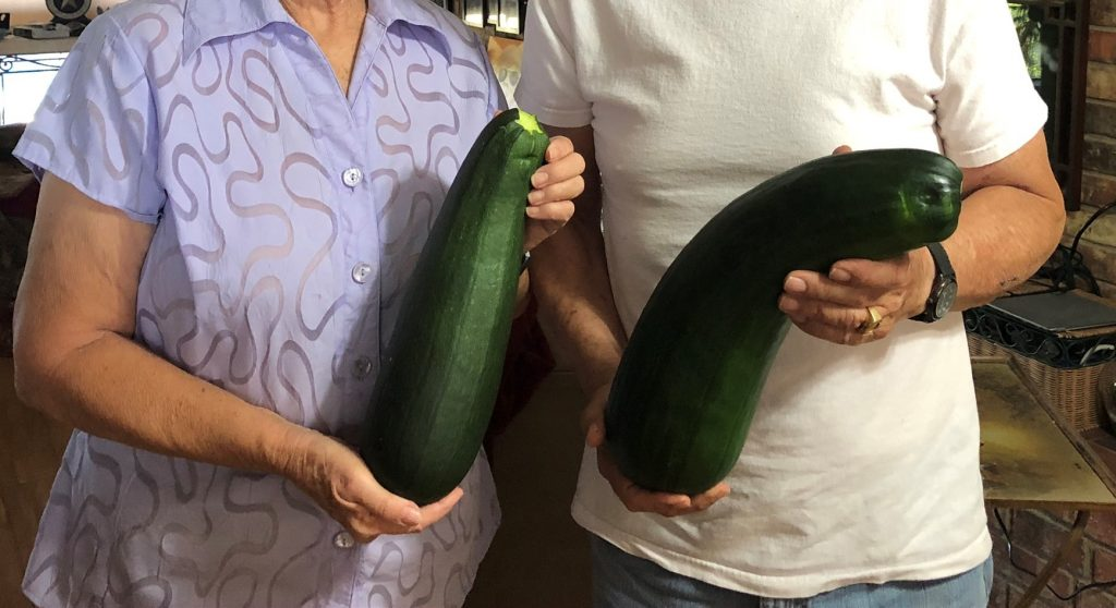 "These giant zucchini make great ""boats"" - 12 meals in these two!"